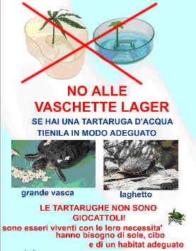 Tartarughe acquatiche sito per saperne di pi for Vasche per tartarughe in plastica