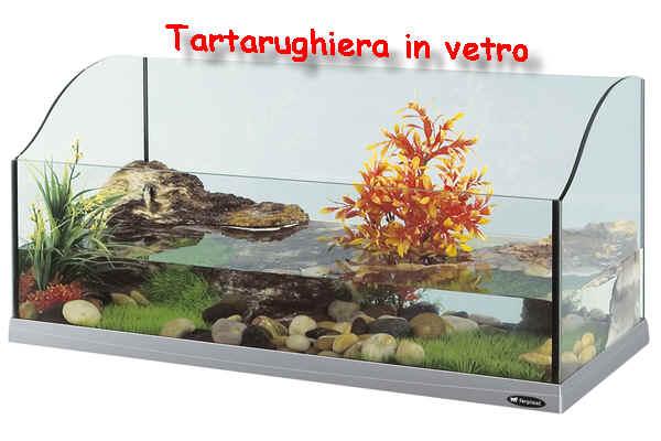Tartarughe acquatiche sito per saperne di pi for Tartarughe vaschetta