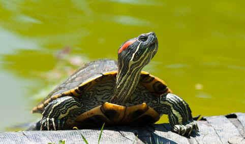 Notizie interessanti for Incubazione uova tartaruga